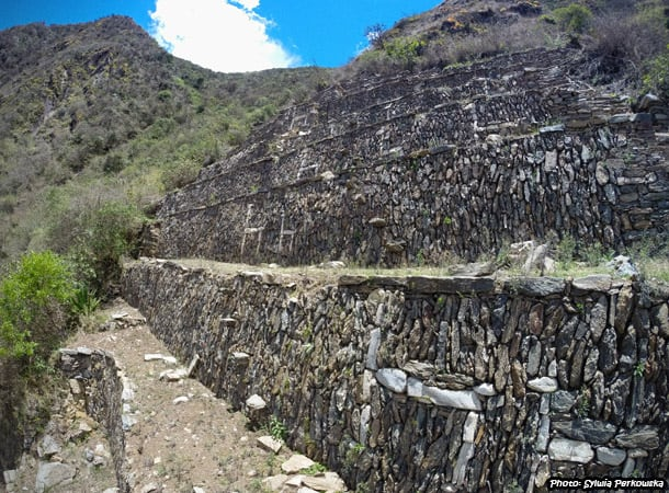 A lot of llamas in Inca ruins Choquequirao