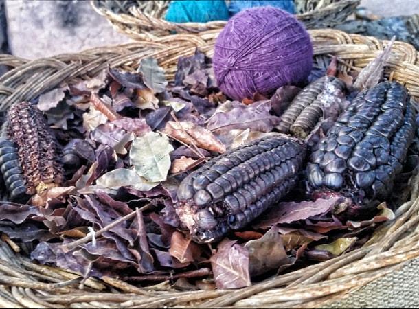 Purple corn