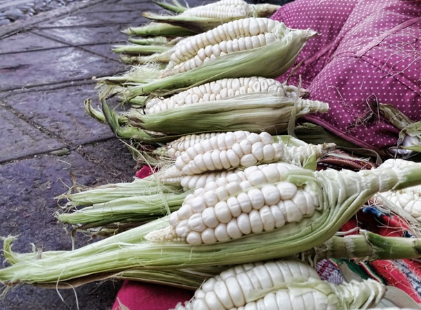 Choclo corn in Peru