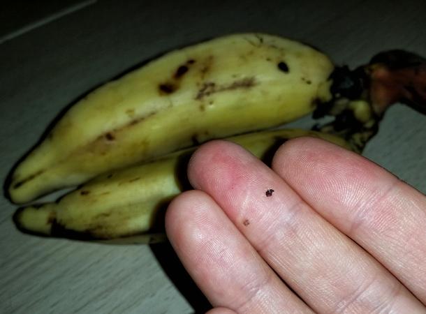 Peruvian fruit banana ISLA