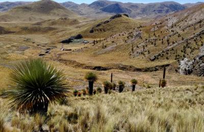 Puyas Raimondii Peru
