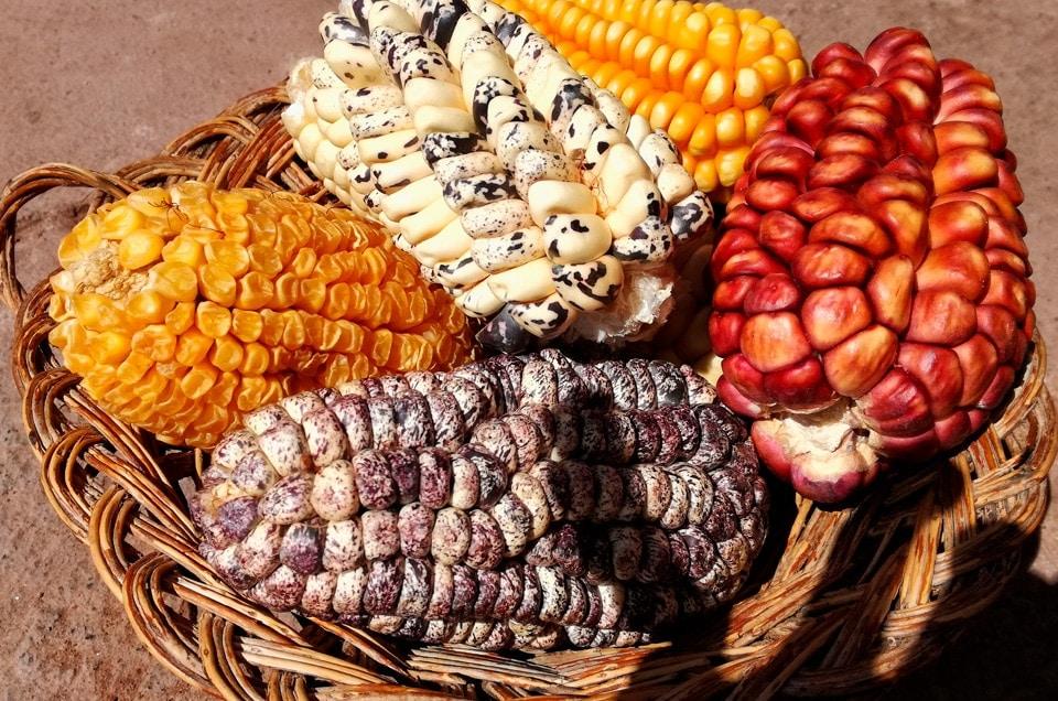 Corn in Peru
