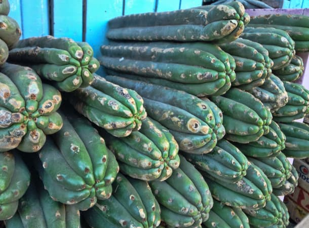 Ceremonie z San Pedro kaktus