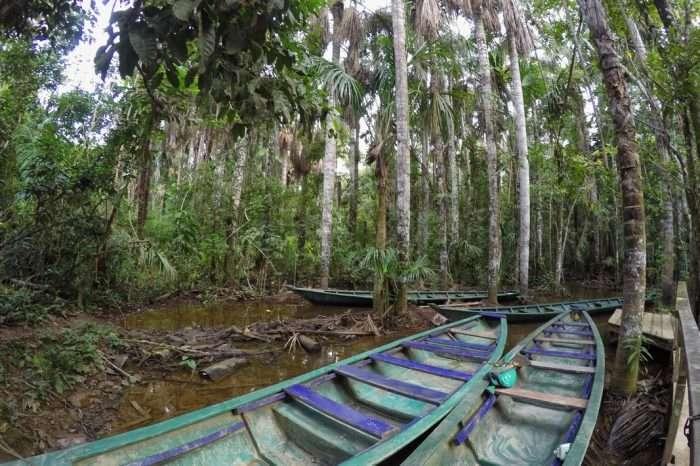 Peruwiańska dżungla i jej skarby w Puerto Maldonado