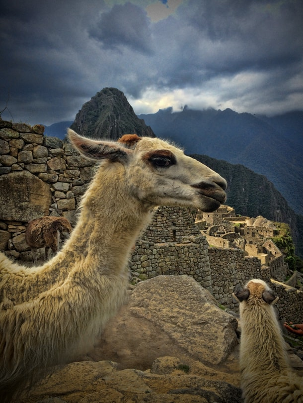 During the visit in Machu Picchu