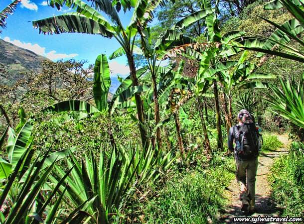 inka jungle tour to machu picchu