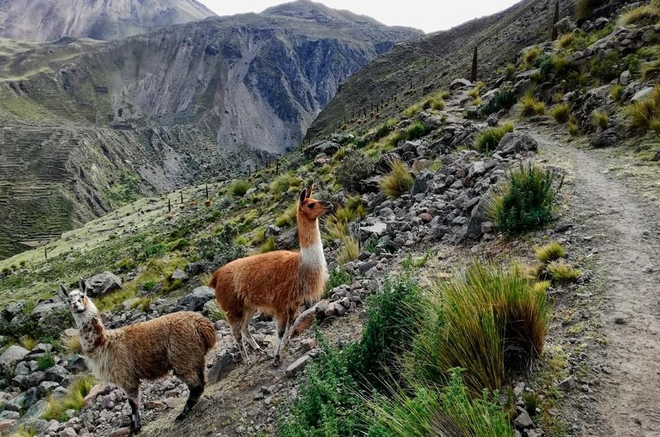 Peru ciekawostki. Ile powinna trwać wycieczka po Peru?