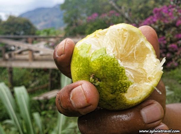 Fruits Peru Lima