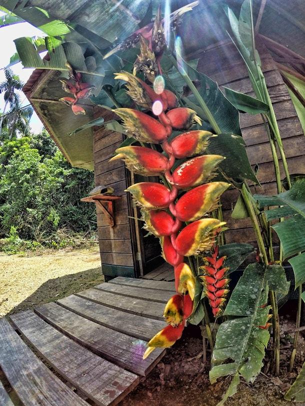 Kwiaty w Peru