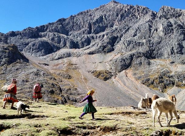Wakacje w Peru z lamami