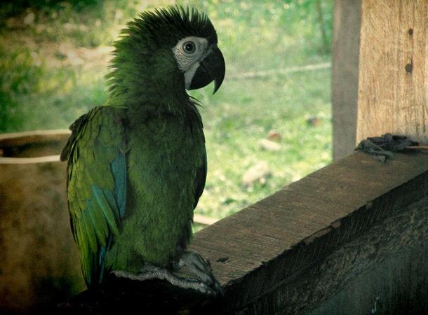 Zwierzęta podczas wakacji w Peru
