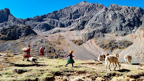 Stado lam na szlaku Larys - dolina Paacancha