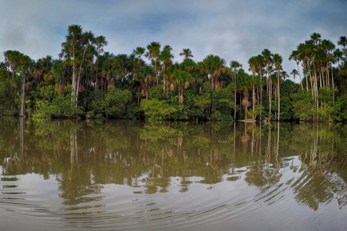 Zapachy i kojące dźwięki dżungli, czyli Tambopata, Madre de Dios, Sandoval