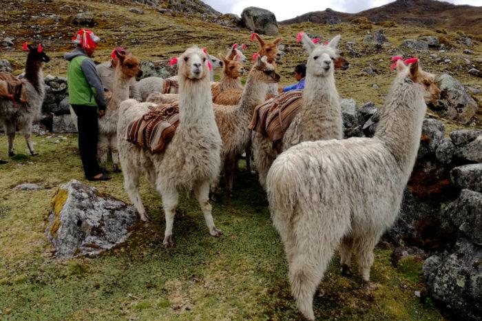 Podróżuj po Peru taniej z naszym FAM TRIP