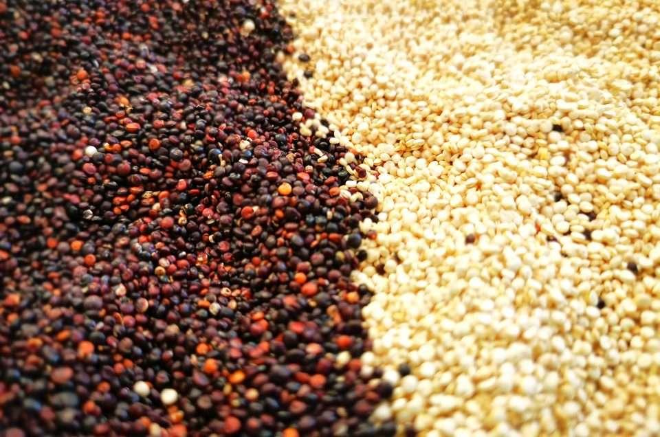 Quinoa, czyli komosa ryżowa z Peru