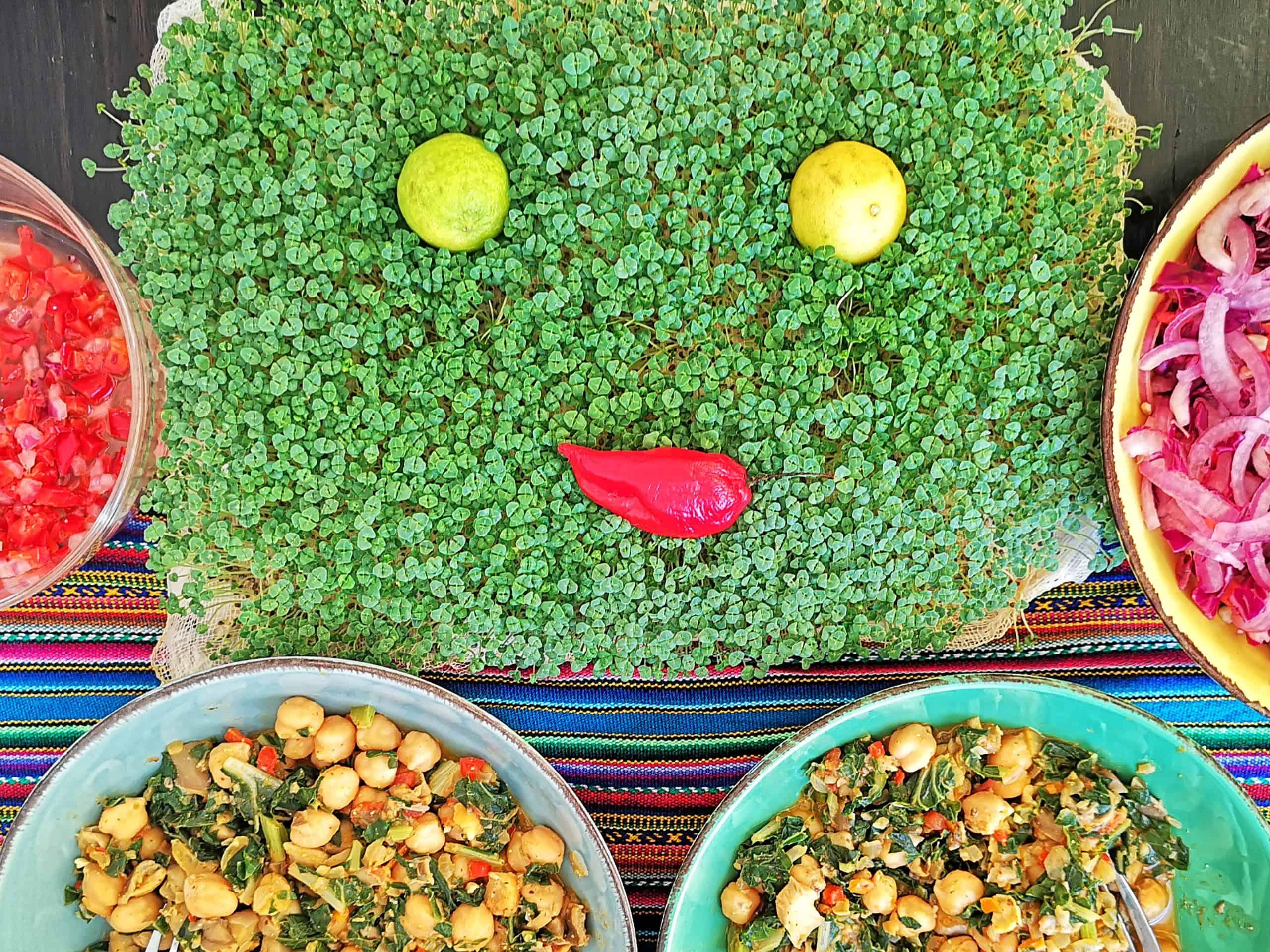 kiełki z nasion chia, szałwia hiszpańska